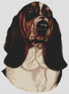 Basset Hound - Tri-color