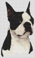 Boston Terrier - Black and White