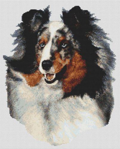 Shetland Sheepdog - Blue Merle PDF