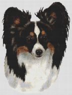 Tri-color Papillon