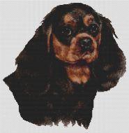 Black & Tan Cavalier King Charles Spaniel PDF
