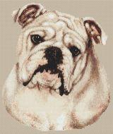 White Bulldog