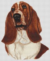 Red and White Basset Hound PDF
