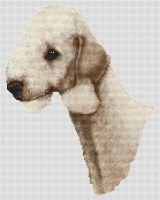 Sandy Bedlington Terrier