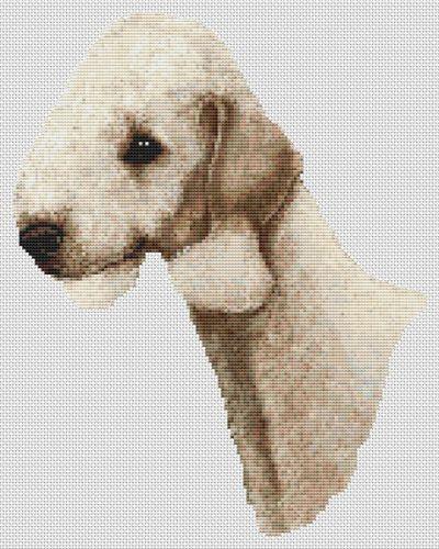Sandy Bedlington Terrier PDF