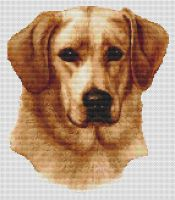Yellow Labrador Retriever 2