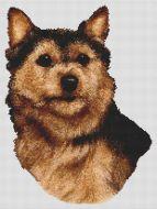 Norwich Terrier PDF