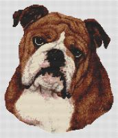 Brown and White Bulldog PDF