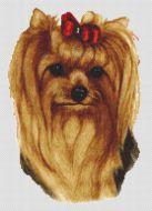Longhair Yorkshire Terrier 2