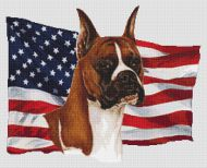 Patriotic Boxer Cropped ears.