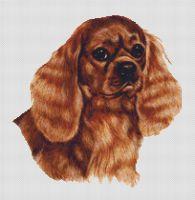 Ruby Cavalier King Charles Spaniel PDF