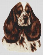Chocolate Parti Cocker Spaniel