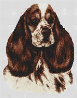 Chocolate Parti Cocker Spaniel PDF