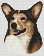 Sable and White Pembroke Corgi