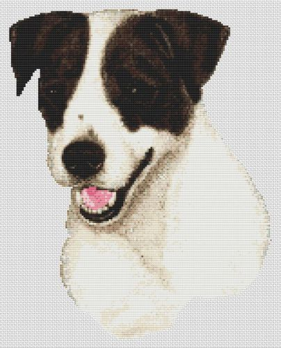 Black and White Jack Russell Terrier