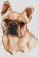 Cream French Bulldog