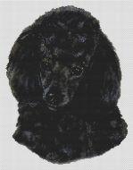 Black Poodle PDF