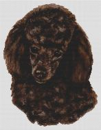 Brown Poodle PDF