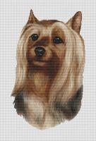 Silky Terrier PDF