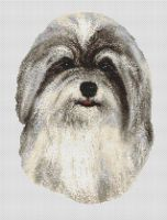 Silver and White Havanese PDF