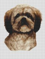 Dark Popped Lhasa Apso