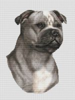 Blue and White Staffordshire Terrier PDF