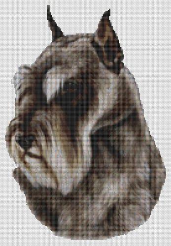 Schnauzer Clipped Ears