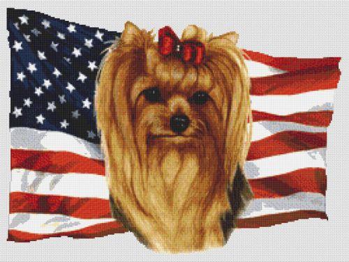 Patriotic Yorkshire Terrier