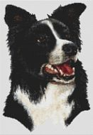 Border Collie III PDF