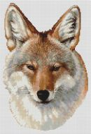Coyote Portrait PDF