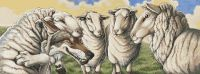 Sheeps Clothing