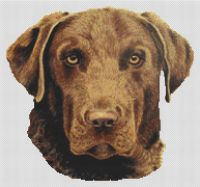 Chesapeake Bay Retriever PDF