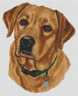 Fox Red Labrador Retriever PDF
