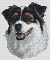 Australian Shepherd Tri-color II