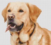 Yellow Lab Smile PDF