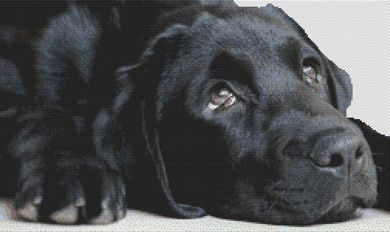 Black Lab Sighs PDF