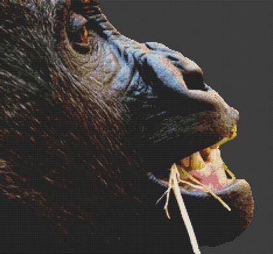 Gorilla PDF