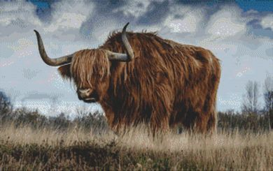 Scottish Highland Bull PDF