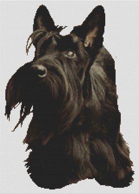 Scottish Terrier Adoration
