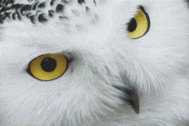 Snowy Owl PDF
