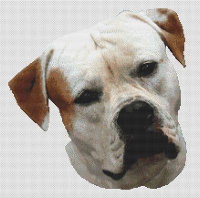 American Bulldog PDF