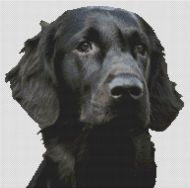 Black Flat Coated Retriever PDF