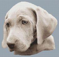 Weimaraner Pup PDF