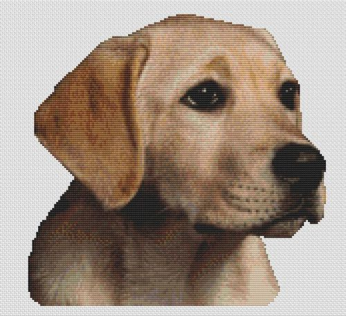 Molly - Yellow Lab Pup PDF