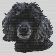 Black Miniature Poodle PDF