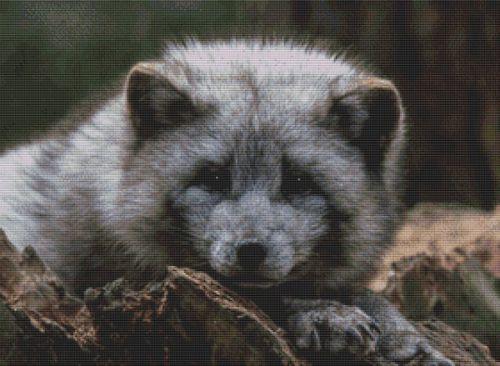 Grey Arctic Fox PDF