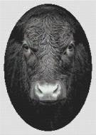 No Bull PDF