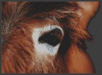 Through the Eye - Donkey PDF