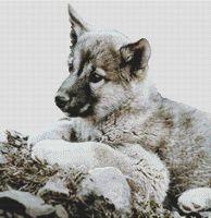 Malamute Puppy PDF