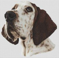 Treeing Walker Coonhound Portrait